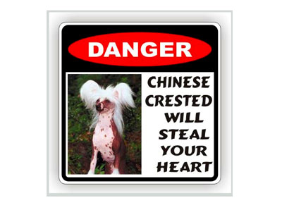 """Наклейка """"Chinese Crested"""""""
